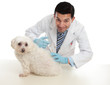 Vet giving pet dog immunisation or other treatment