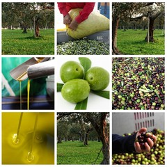 Lavorazione delle olive e olio d'oliva