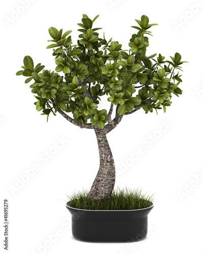 Aluminium Bonsai bonsai plant in pot isolated on white background
