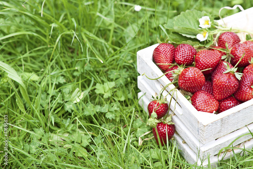 Fresh strawberry in a box on grass