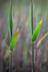 New reeds