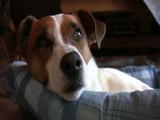 Gemütliches Nickerchen im Hundekorb