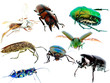insect beetle collection set
