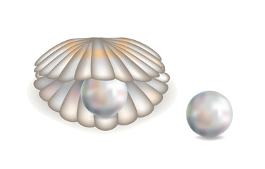Beautiful shell with pearl isolated, vector illustration