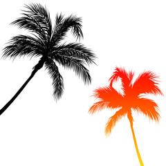 Vacances sous les palmiers