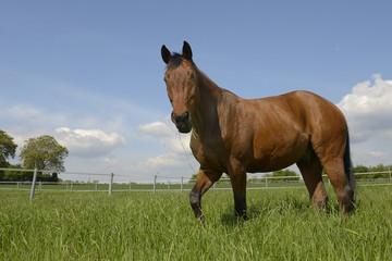 Pferd auf seiner Koppel