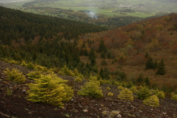 young trees on volcanic slope in massif central