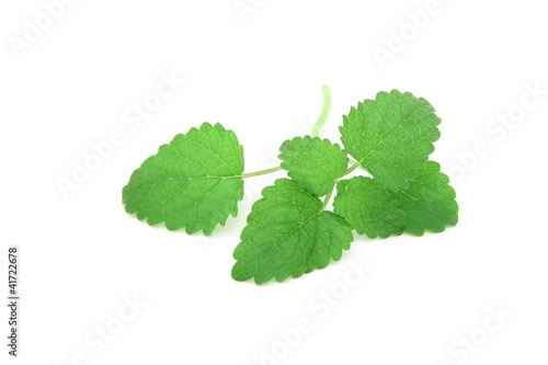 Melissa Officinalis - Lemon Balm