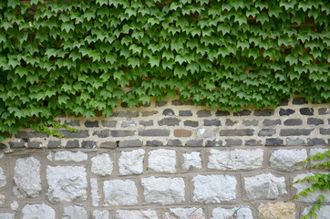 Plants and wall