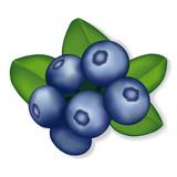 Blueberries illustration, isolated on white.