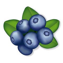 Blueberries illustration, isolated on white.