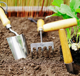 Garden tools for transplanting and weeding poster