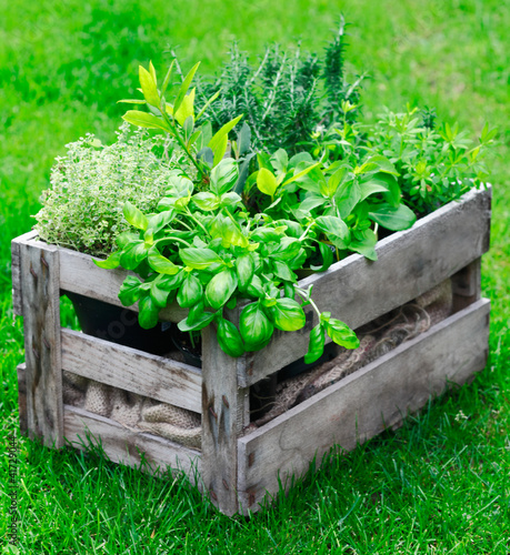 Rustic crate with fresh herbs