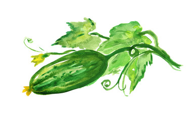 hand-painted cucumber