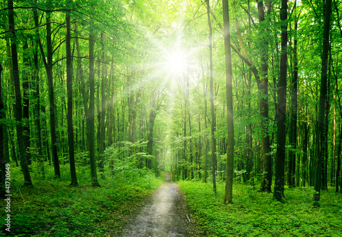 forest - 41730649