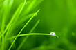 World into a Water Drop on Grass / with copy space