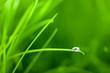 Der letzte Tropfen am grünen Gras