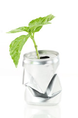 New life. Aluminum can with growing green plant