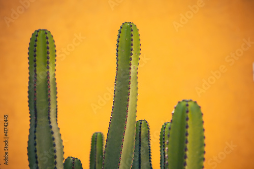 cactus on yellow background