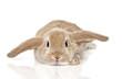 Bunny - 41754430