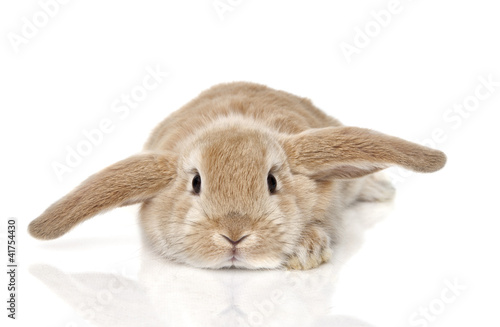canvas print picture Bunny