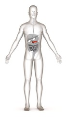 3d render of artificial character with digestive system