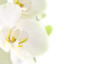 Fototapeten,orchid,blume,hintergrund,sätze