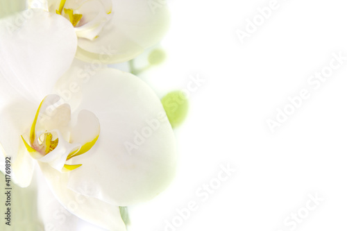 Fototapeten,orchidee,blume,hintergrund,sätze