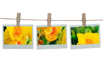 Polaroid templates with canna flower