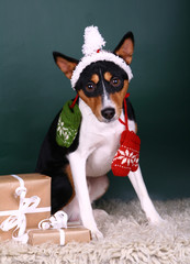 Christmass basenji of green background