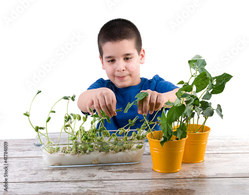 Plant Cultivation Experiment