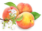 Fototapety Fresh orange peaches with green leaf
