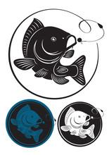 Rysunek pokazuje ryby karpia
