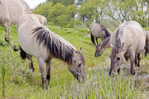 Fototapeten,tier,tier,pferd,pferd