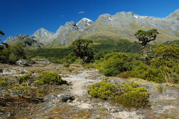 "Routeburn track scenery, one of ""great walks"" in New Zealand"