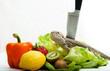 Bartagame mit Obst, Gemüse und Messer