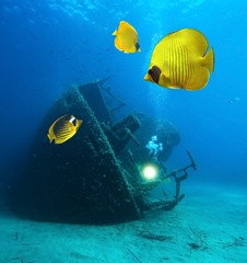 Underwater image of wreck and Masked Butterfly Fish