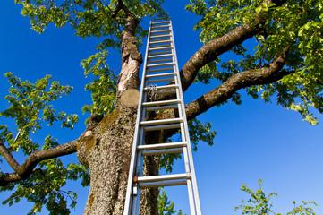Leiter am Obstbaum