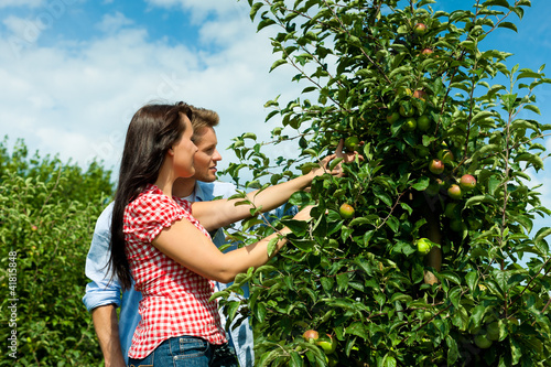 Couple harvesting apples in summer