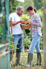 Couple picking vegetables in their kitchen garden