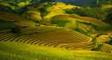 Fototapeta azjatycki - Bali - Dziki pejzaż