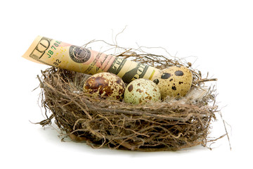 Money lying in a nest with eggs