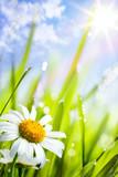 Fototapeta kwiat - trawa - Kwiat