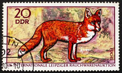 Postage stamp GDR 1970 Red Fox, Vulpes Vulpes