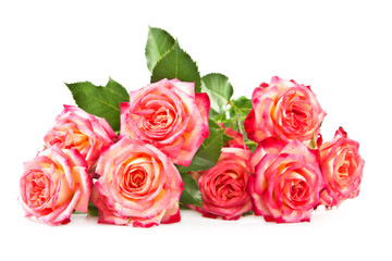 Roses on a white background.