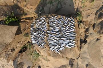 Essicazione del pescato del fiume Mekong in Laos