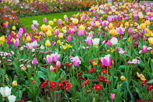Colorful spring summer garden, flowers