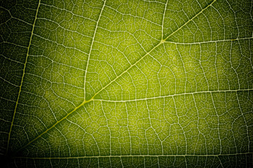 Green Leaf HDR