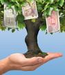 Drachma tree