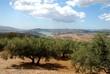 Olive grove by Lake Vinuela, Spain © Arena Photo UK